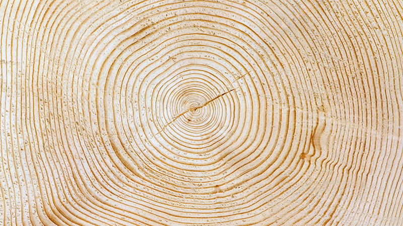 Timber annual rings