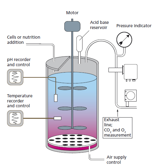 A schematic of the fermentor tank
