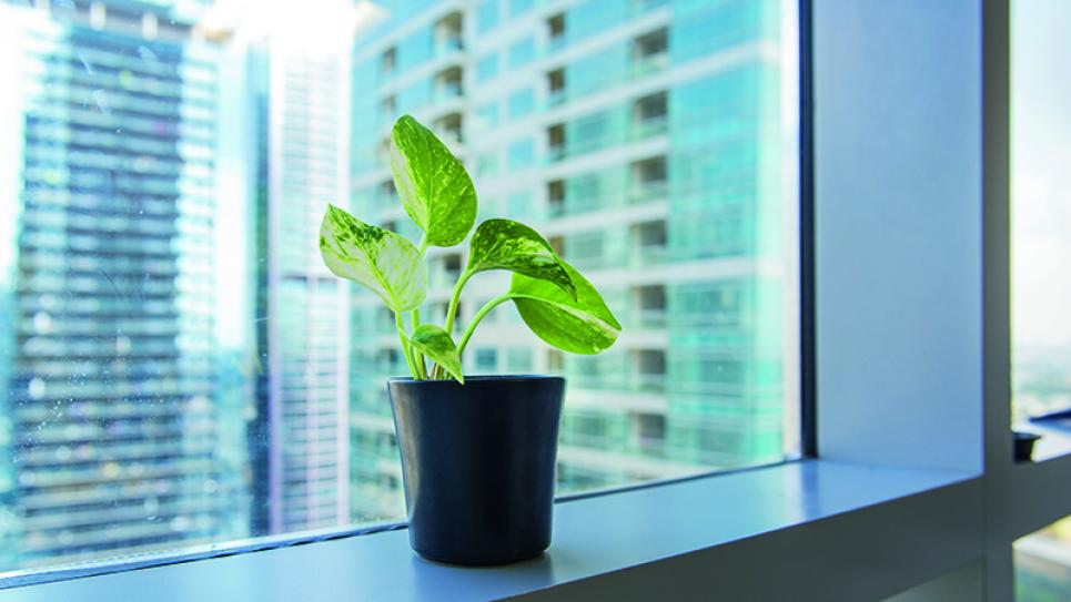 Indoor Air Quality in Office Buildings