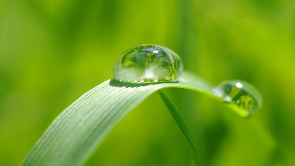 Drop on a green leaf -humidity